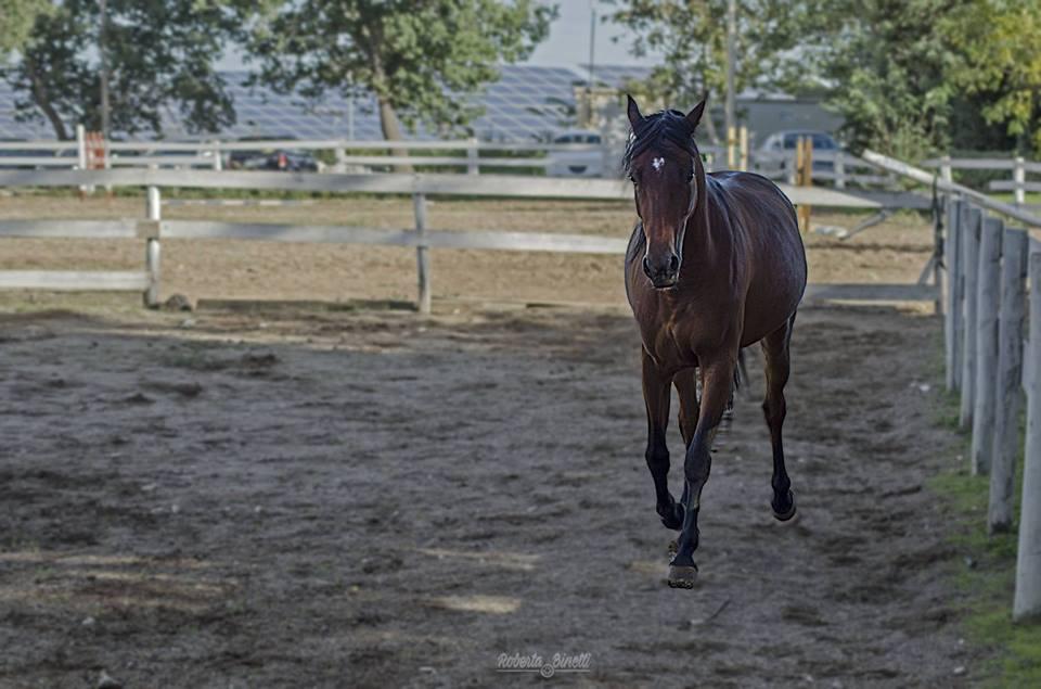 Il commercio di cavalli e le leggi che lo regolano