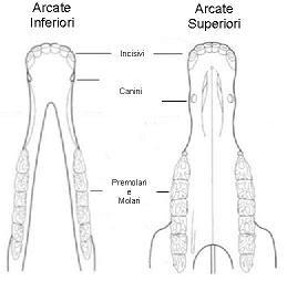 arc-dent