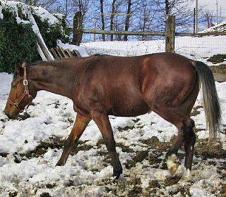 cavallo-del-ventasso-2