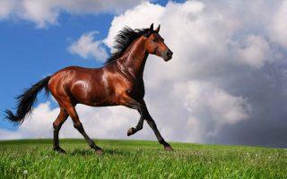 cavallo-arabo-1024x640