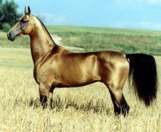 cavallo-dorato-foto