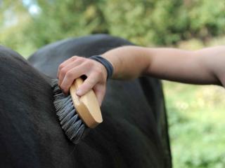 come-trattare-il-pelo-del-cavallo