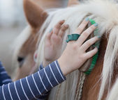 depositphotos_92388140-stock-photo-girl-grooming-horse