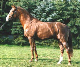 cavallo del don
