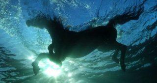 cavallo_in_acqua