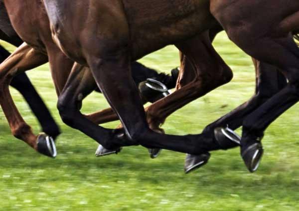Tendine: punto debole dei cavalli