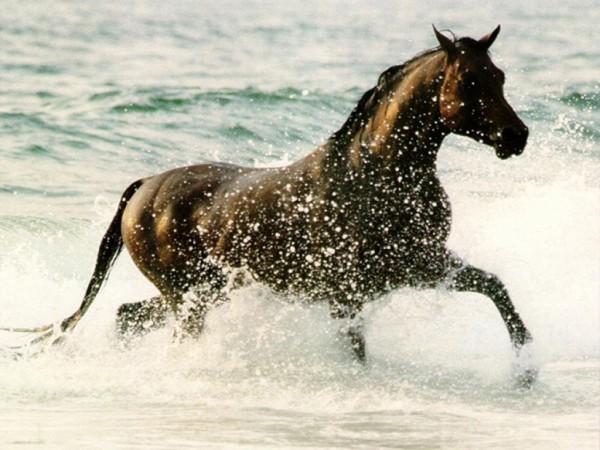 L'acqua per i cavalli: apporti e fabbisogni di assunzione