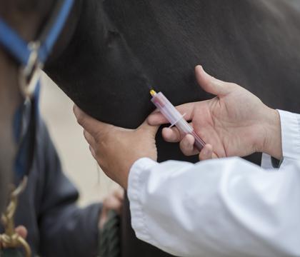 L'anemia infettiva equina e il test di Coggins