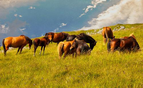 La ricetta casalinga: una soluzione naturale a diversi problemi dei cavalli