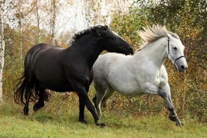 Valutazione dello stato di benessere e di salute del cavallo