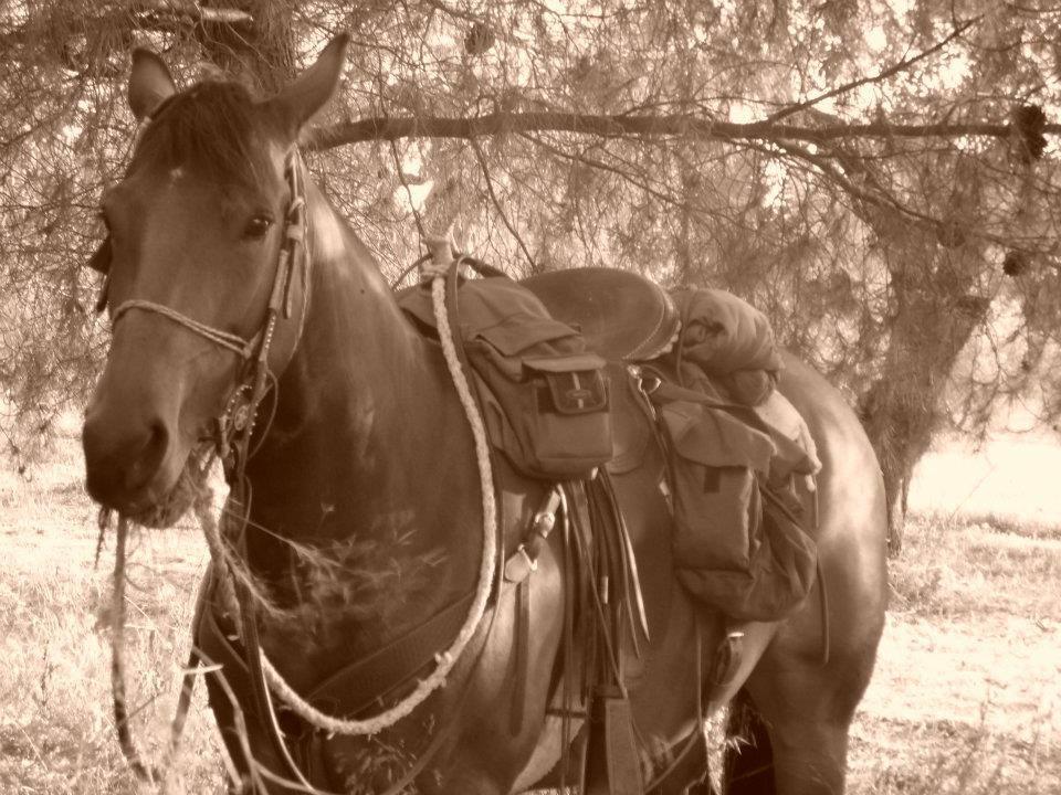 Come evitare l'affaticamento del cavallo in passeggiata