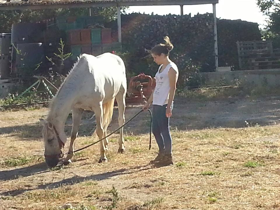 Condurre il cavallo alla mano 10 regole base da - Avere un cavallo ...