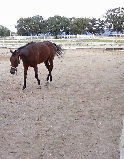Le coliche nei cavalli: una costante spesso ricorrente