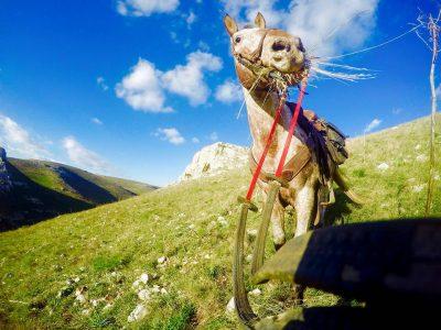 Condurre il cavallo alla mano. 10 regole base da rispettare!