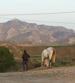 Conoscenza e valutazioni del cavallo. Caratteristiche principali.