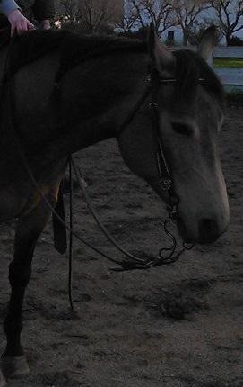 Come regolare la testiera sulla testa del cavallo