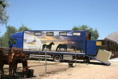 Normativa sulla protezione degli animali durante il trasporto